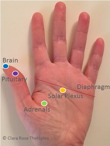 reflexology hand map